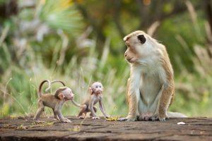 Im Reich der Affen