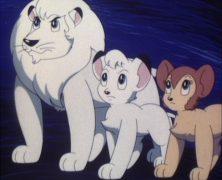 Boubou Der Koenig der Tiere