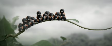 Die Winzlinge Abenteuer in der Karibik Minuscule Les Mandibules du Bout du Monde