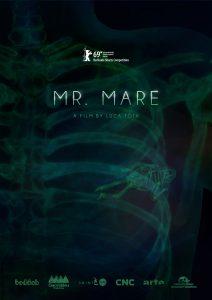 Mr Mare