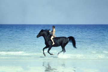 Der schwarze Hengst The Black Stallion