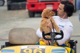 Enzo und die wundersame Welt der Menschen The Art of Racing in the Rain