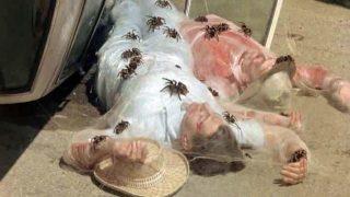 Mörderspinnen Kingdom of the Spiders