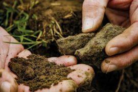 Unser Boden, unser Erbe (2020)