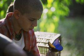 Das Geheimnis des blauen Schmetterlings (2004)
