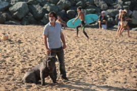 Der Hund bleibt Mon chien stupide My Dog Stupid