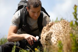 Du gegen die Wildnis Der Film Animals on the Loose: A You vs. Wild Movie Netflix