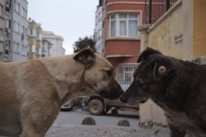 Streuner - Unterwegs mit Hundeaugen