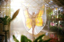 The Butterfly Tree Die Sinnlichkeit Des Schmetterlings
