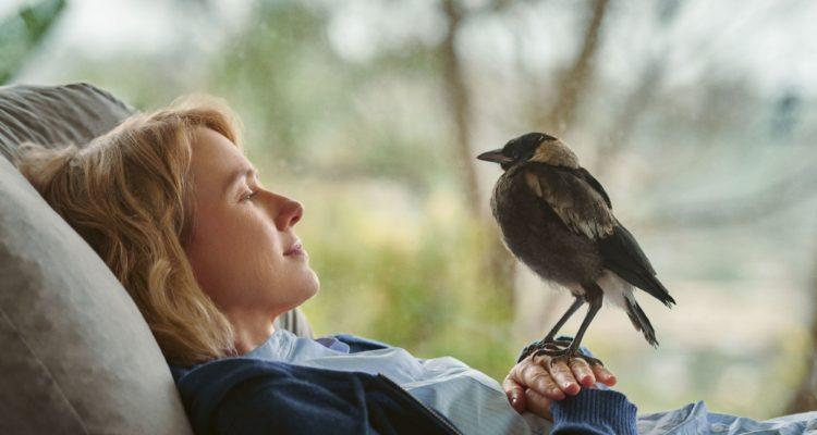 Beflügelt – Ein Vogel namens Penguin Bloom