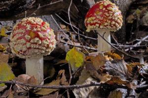 Fantasische Pilze – Die magische Welt zu unseren Füßen