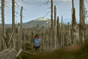 Der wilde Wald Natur Natur sein lassen
